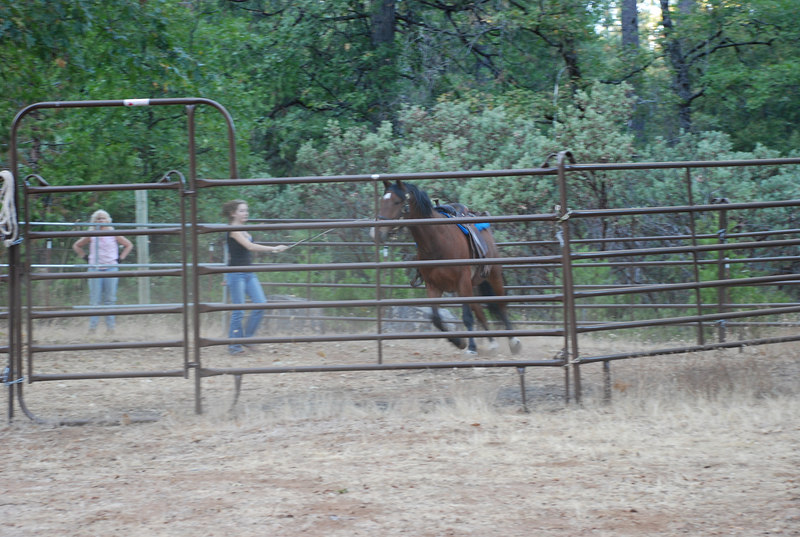Megan works with Jake in the round corral.