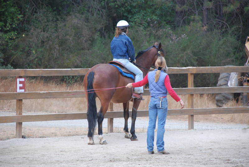 This is Jake's first real training session with a formal trainer. Megan is the rider. She will be working with Jake for her High School Project. Jake does not know how to move forward on command yet or used to having a bit in his mouth.