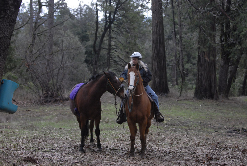 "Jake behind ""Dakota"". We ponied him behind the other horse whenever we could to get him used to equipment and just getting out."