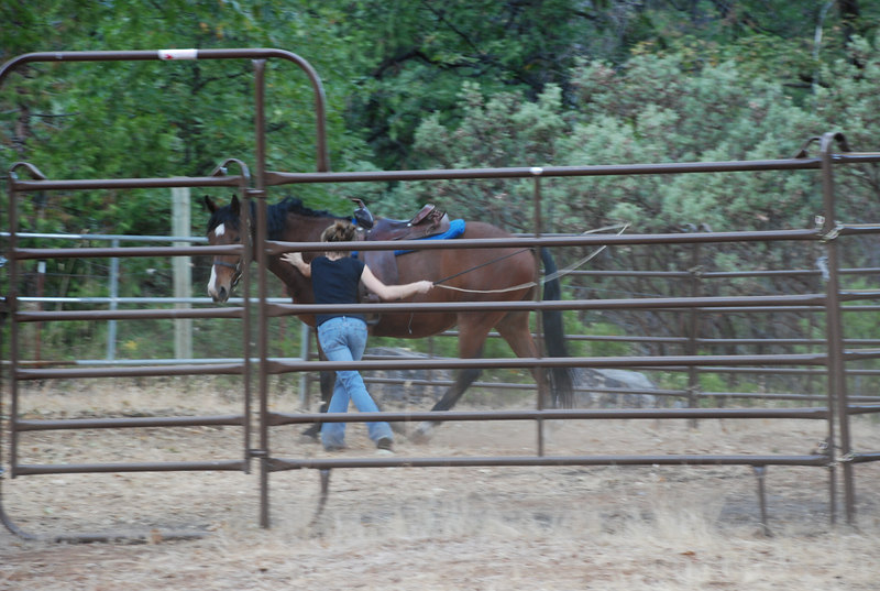 Training a horse takes time and patience.