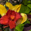 Red & Yellow flowers