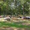 Picnic Grove #1