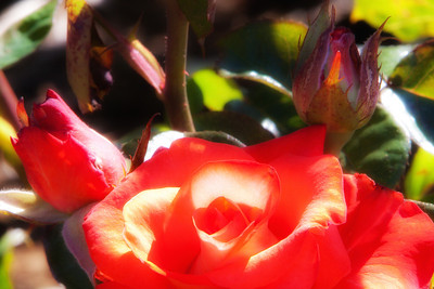 IMG_1938T