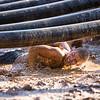 www.ReddingCalifornia.Photography