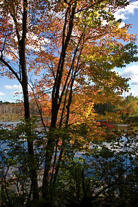 Colors at edge of Nashua River   (Oct 13, 2007, 01:54pm)