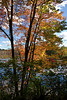 <b>Colors at edge of Nashua River</b>   (Oct 13, 2007, 01:54pm)