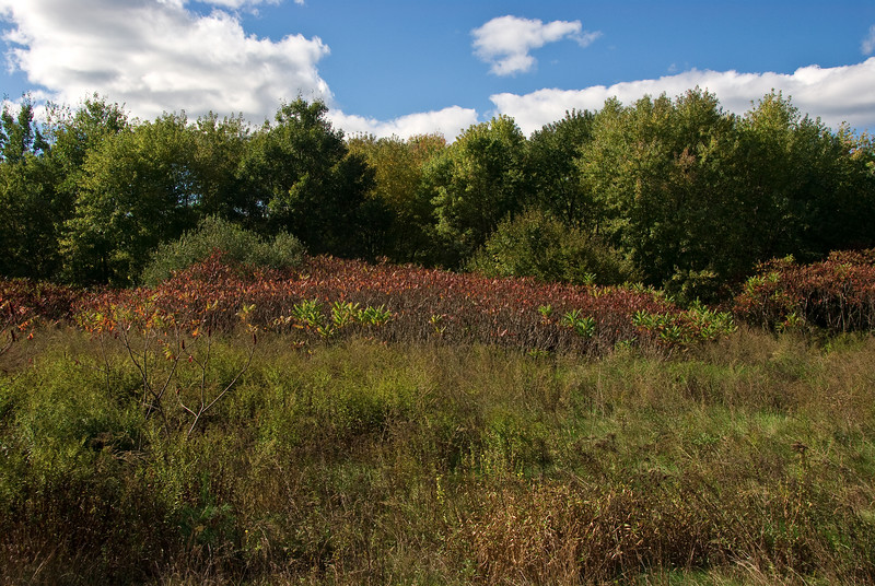<b>Field at the side of the trail</b>   (Oct 13, 2007, 01:25pm)