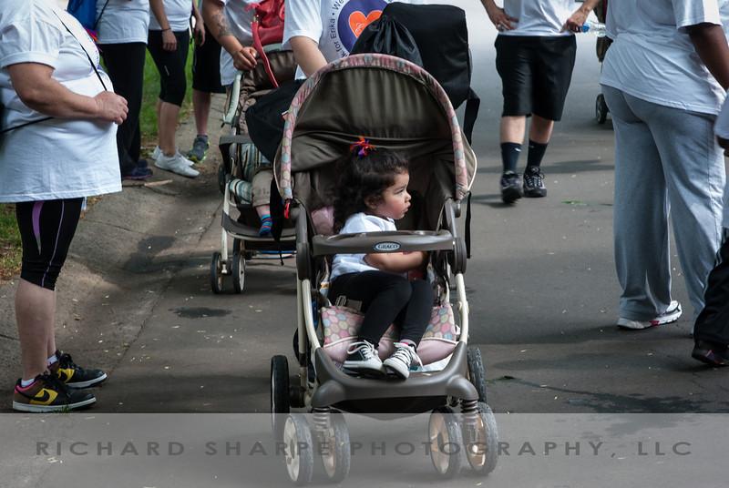 MS Walk 2013, 105520