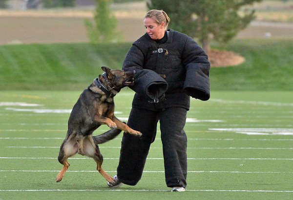 K-9 Gypsy bites Broomfield Police Officer Katie Gunn during a demonstration at the National Night Out Picnic in the Park at Broomfield County Commons Park on Tuesday.<br /> <br /> August 7, 2012<br /> staff photo/ David R. Jennings