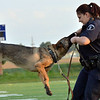 Broomfield Police Officer Danielle Fazcak rewards her K-9 Gypsy with a toy after she found drugs during a demonstration at the National Night Out Picnic in the Park at Broomfield County Commons Park on Tuesday.<br /> August 7, 2012<br /> staff photo/ David R. Jennings