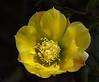Catus Flower