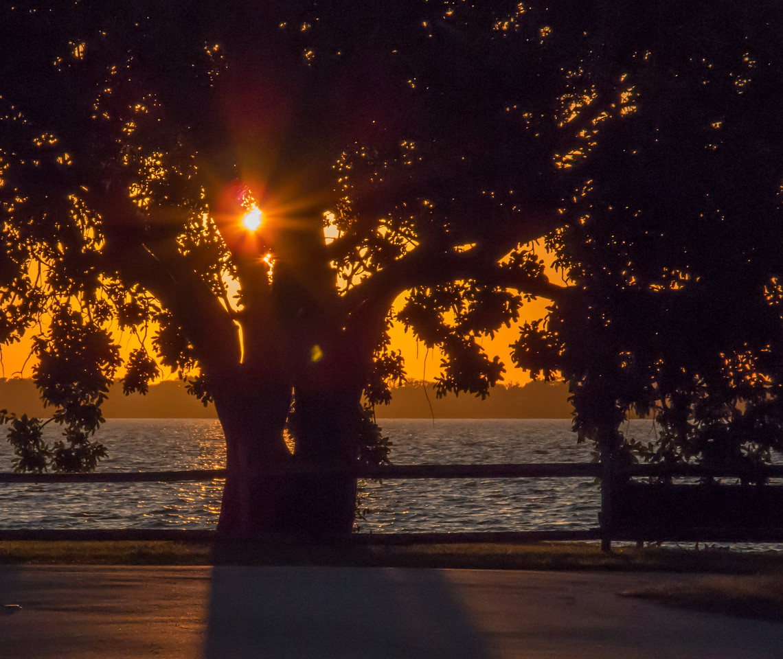 Sunset around the Riverside Park- an almost fall looking tree.