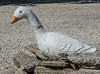 I guess this wasn't a real swan!<br /> Look its so pretty... oh wait... its not real!