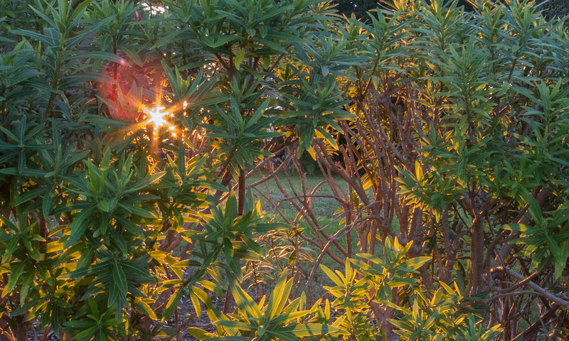 Sunset around the Riverside Park<br /> Sun peeking out from behind the bushes