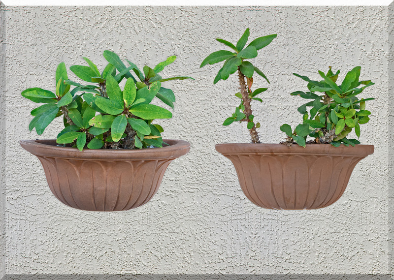 Stucco Wall Plants