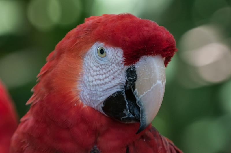 • Location - Brevard Zoo<br /> • Parrot