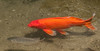 • Location - Brevard Zoo<br /> • Koi fish and a friend