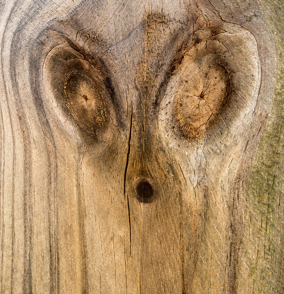• Location - Indialantic Neighborhood<br /> • Looks like a face from how these knots were laid out