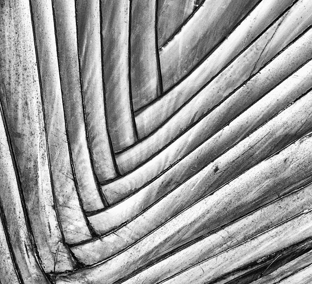 Palm Frond Interesting design