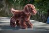 Cute stuffed dog I saw on top of a power transformer