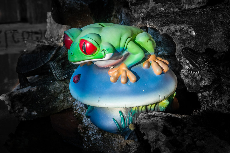 Neat looking frog