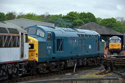 Class 37 No 37109 in Wansford Yard on 18 May 2013