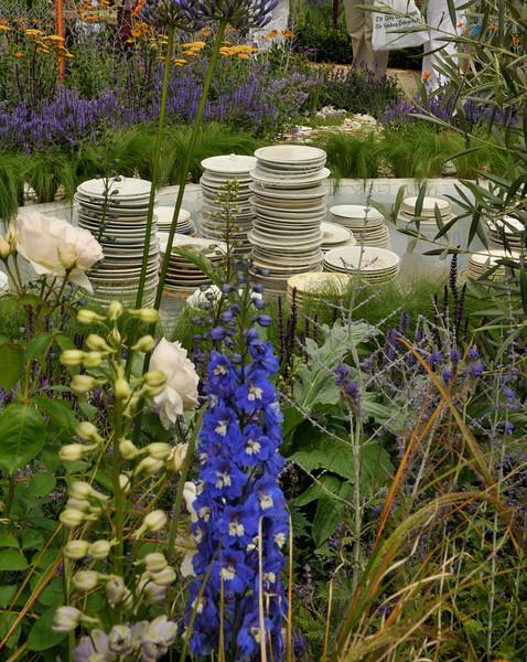Blue Flower Pattern Plates