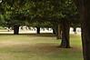 Hampton Palace lawn