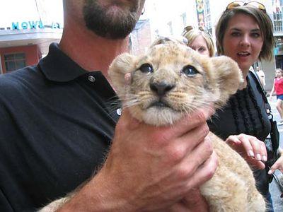 LION !!!