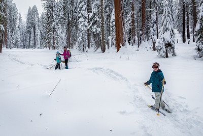 Cross Country Skiiing Among the Sequoias