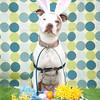GPF_Easter14_12