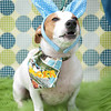 GPF_Easter14_04