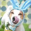 GPF_Easter14_06