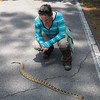 Dr. Jayme Waldron gets a close-up look at a rattlesnake as it crosses a road. She has spent much of her career tracking the eastern diamondback rattlesnakes to learn more about how and where they live, and how far they roam.