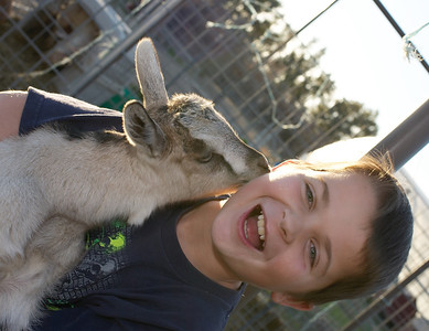 Baby goat picture with Brandon. Gretel loves Brandon's ears.
