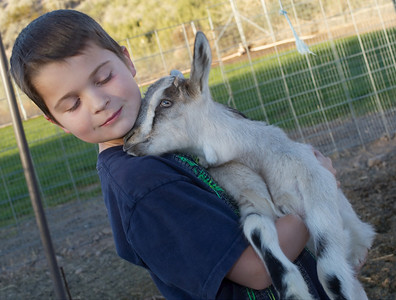 Baby goat pictured here is newborn Gretel seen with Brandon at Quail Hollow Farm CSA Moapa Valley community supported agriculture.