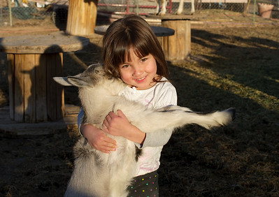 Baby goat pictured here Hansel newborn with Bella granddaughter of Laura and Monte owners of Quail Hollow Farm CSA Moapa Valley community supported agriculture.