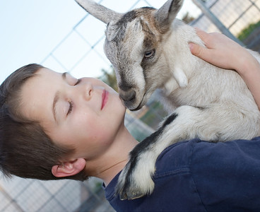 Baby goat pictured Brandon Monte and Laura's grandson.