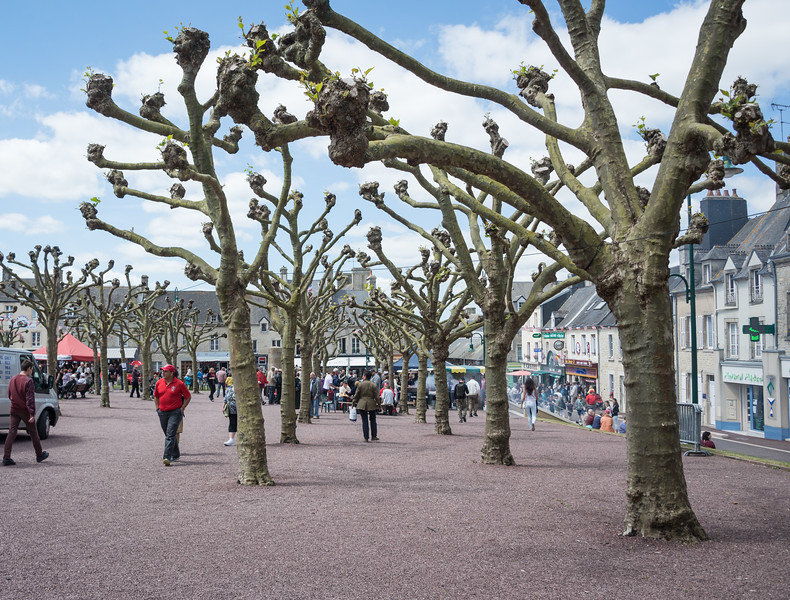 Rows of oddly-pruned trees march from the church down the town square