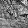 Sea Island Lane - Professional Division, Black and White: Second Place