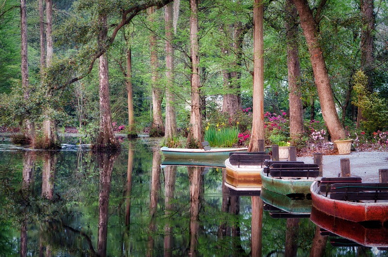 Early Morning in Cypress Gardens - Professional Division, Color: First Place