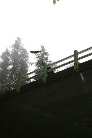 A Coho salmon carcass takes flight.