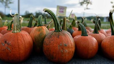 LSC Great Pumpkin 10k 2014