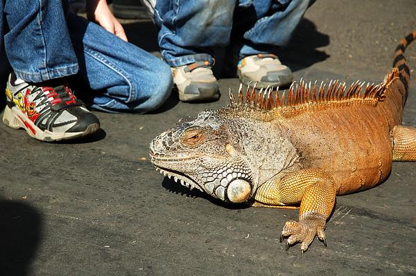 OC Pet Expo 2007