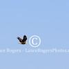 Bald Eagle Graces Parade Deck OCS Graduation