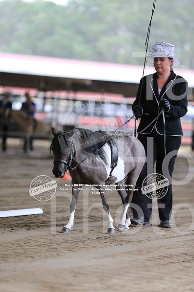 AMHS State Show 2015