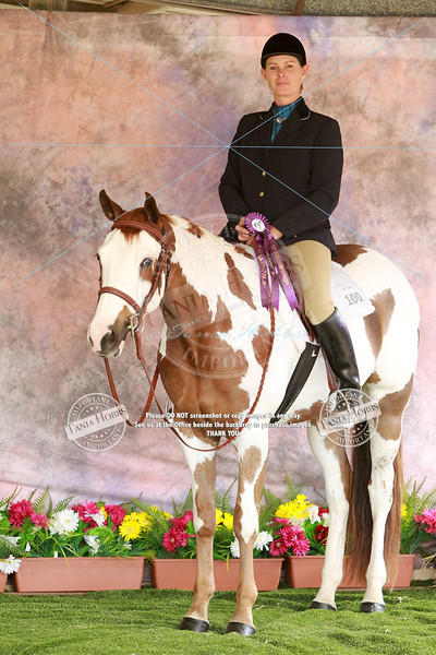 QLD Paint Horse State Show