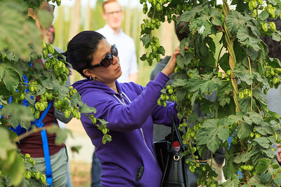 OMSI 4B Hop Farms Tour