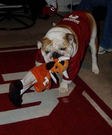 """<font size=""""3"""">Bently the dog demonstrates his opinion of Texas</font>"""