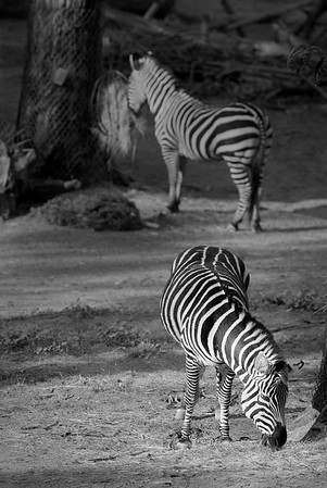 Oakland Zoo - Bay Area Photography Meet Up